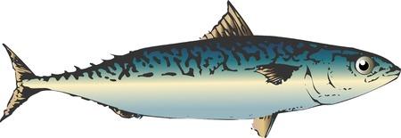 mackerel: Sabah