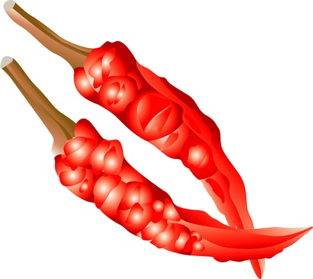 red pepper: Red pepper Stock Photo