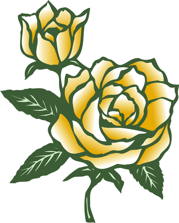 yellow roses: Yellow Roses