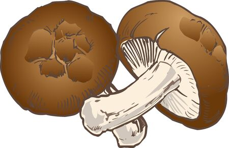 provisions: Shiitake mushroom Stock Photo