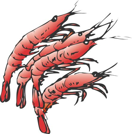 northern: Northern shrimp