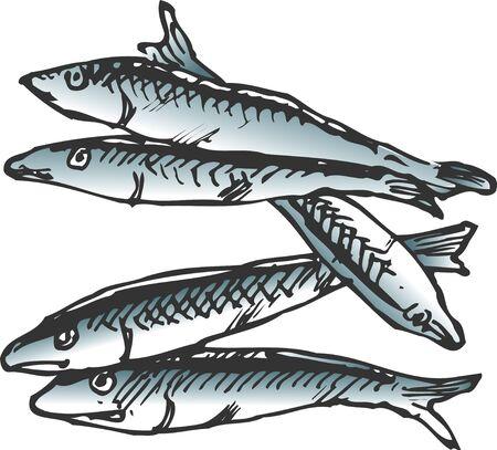 sardine: Niboshi