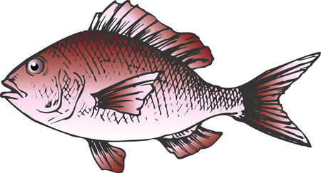 bream: Red sea bream