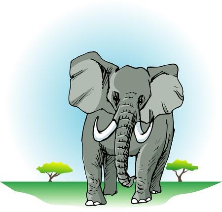 land mammal: African elephants