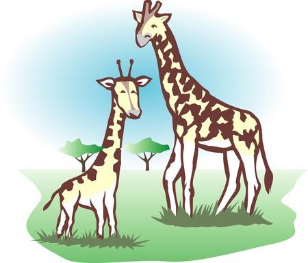 living organism: Giraffe