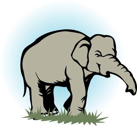 Elephant 版權商用圖片