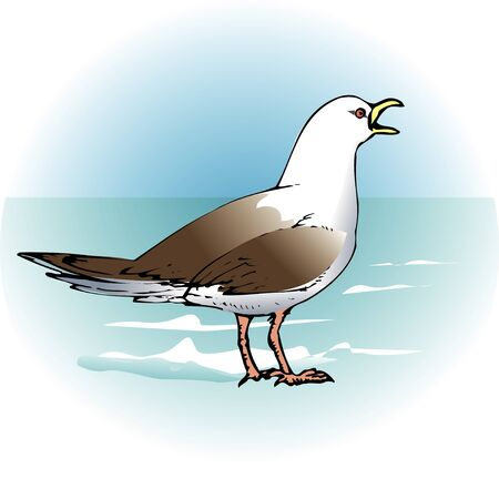 living thing: Black-tailed gull