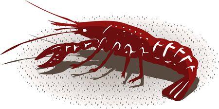 seawater: Shrimp