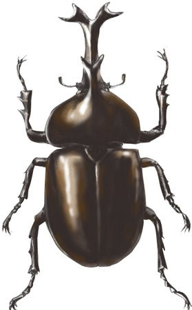 living thing: Beetle Stock Photo
