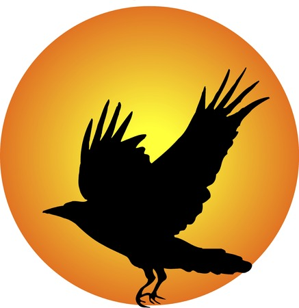 living organism: Crow Stock Photo