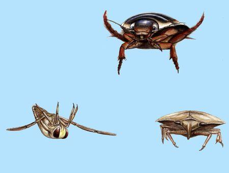 水の中の昆虫 写真素材
