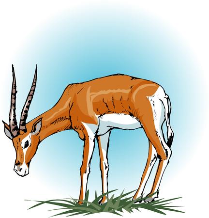 gazelle: Gazelle