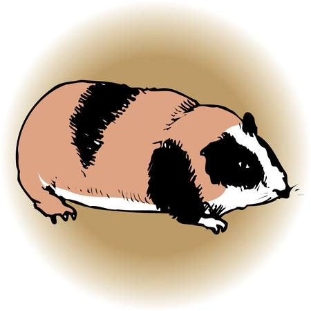 living organism: Guinea pig