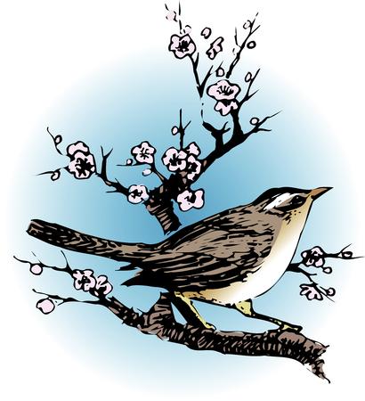 bird nightingale: The bush warbler plum