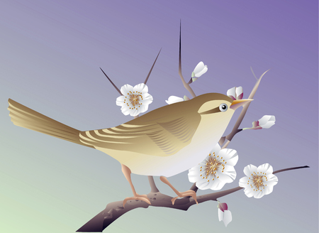 bush: The bush warbler plum