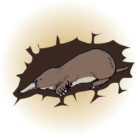 animal mole: Mole Stock Photo