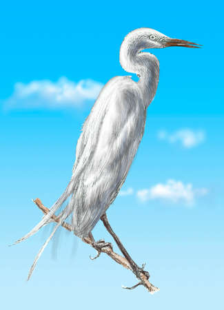 great: Great egret