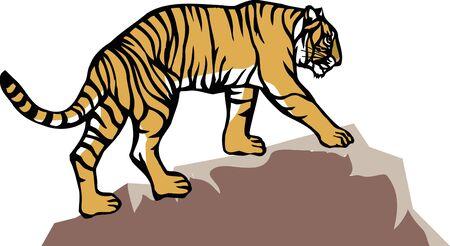 rocky: Rocky Tiger