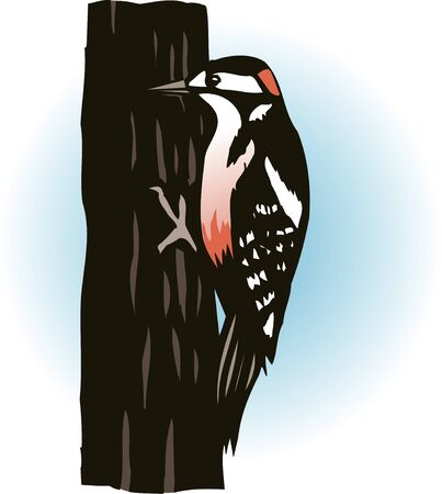 great: Great spotted woodpecker