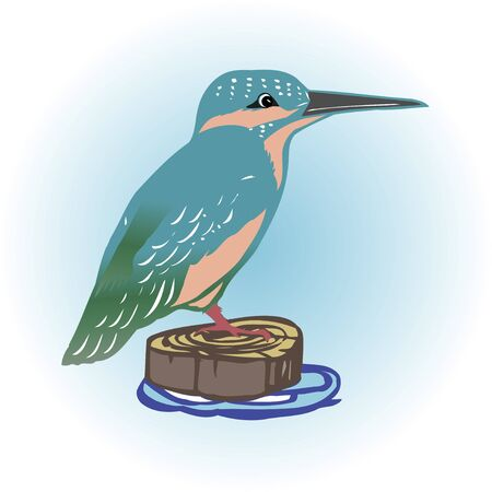 kingfisher: Kingfisher Stock Photo