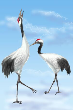 mating: Japanese crane mating Stock Photo