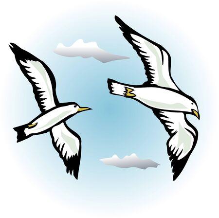 gull: Sea Gull Stock Photo