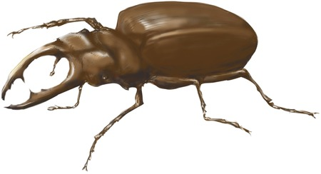 living organism: Stag beetle Stock Photo