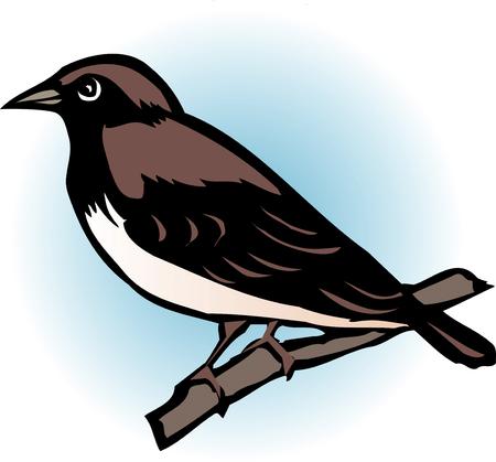 sparrows: Sparrow