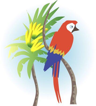 living organism: Parrot