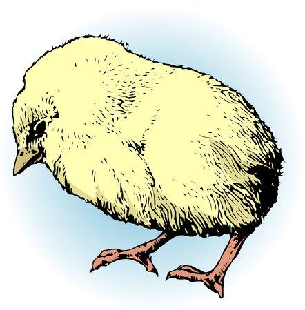 living organism: Chick