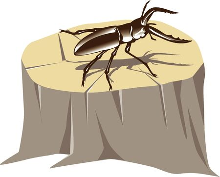 stag beetle: Stag beetle Stock Photo