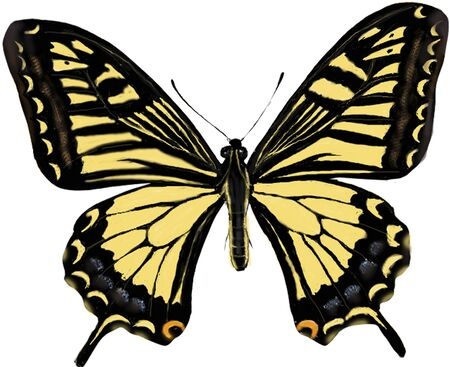 swallowtail: A common yellow swallowtail
