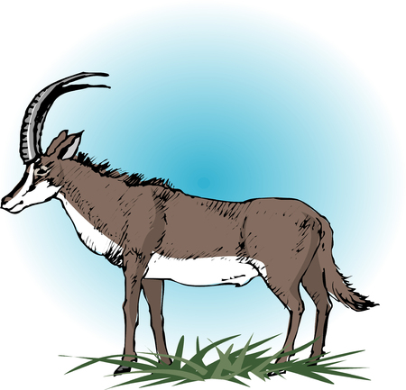 sable: Sable antelope