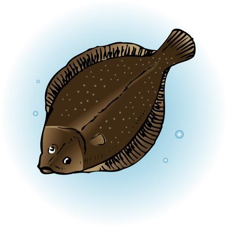 flounder: Japanese flounder Paralichthys olivaceus