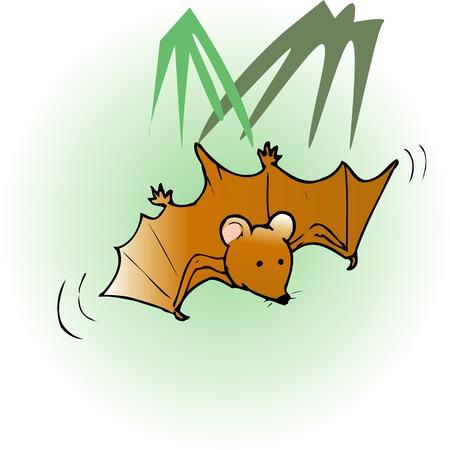 animal mole: Bat