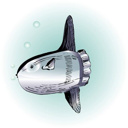 sunfish: Sunfish Stock Photo