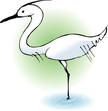 living organism: Heron