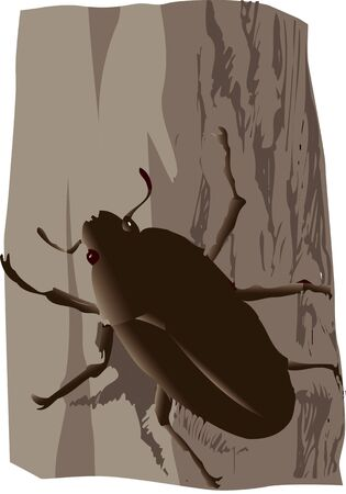 stag beetle: Sawtoothed stag beetle female