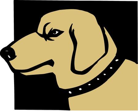 living organism: Dogs