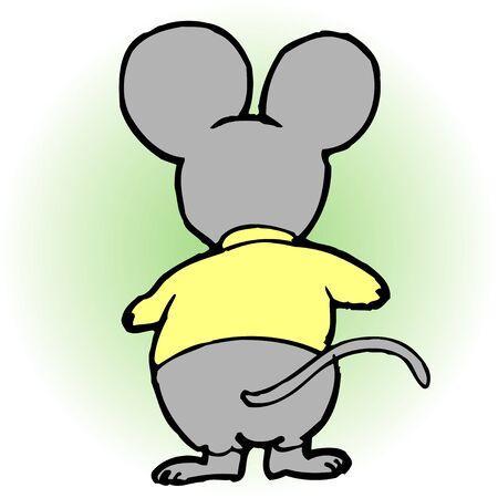 mammalia: Rat