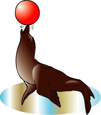 mammalian: Sea lion