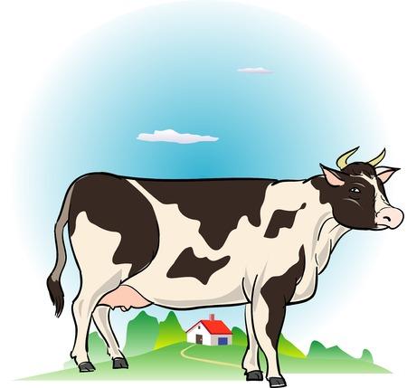 holstein: Holstein