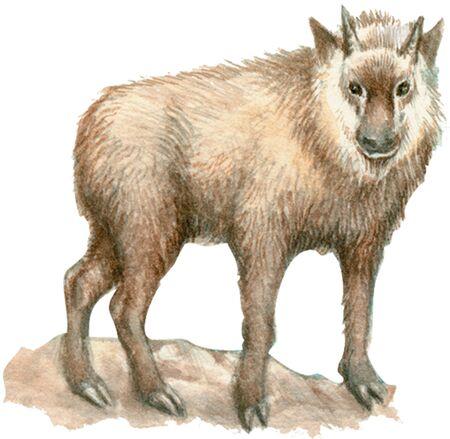 mammalian: Antelope