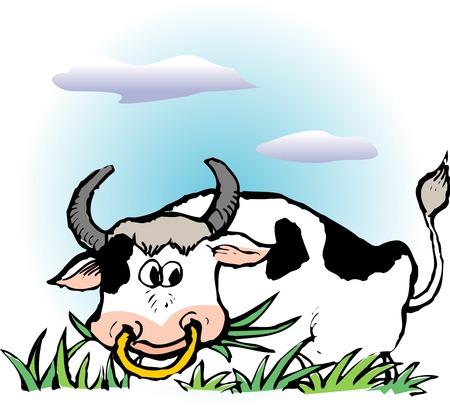 bovine: Holstein