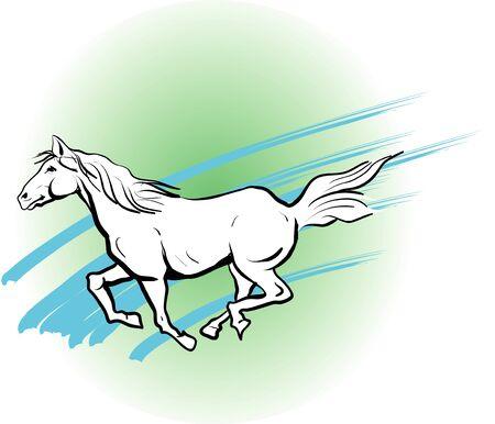 mammalia: White horse