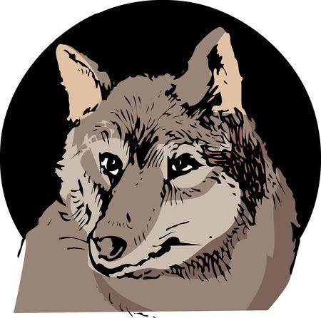 mammalian: Wolf