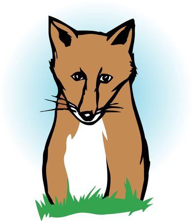 mammalia: Fox