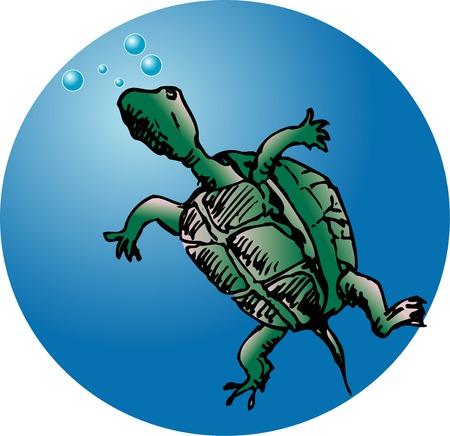 living organism: Turtle