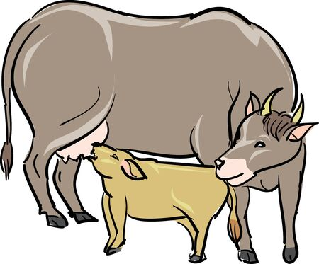 bullfighting: Cattle parent and child