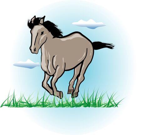 mammalia: Equine